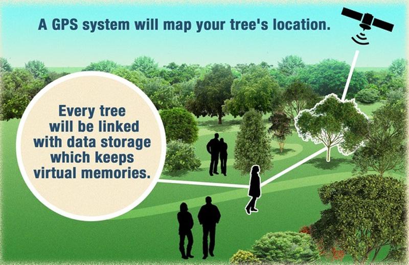 В США можно после смерти стать деревом