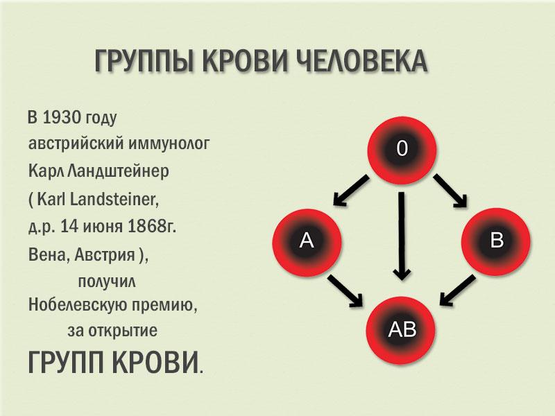 Группы крови - интересные факты о влиянии на организм